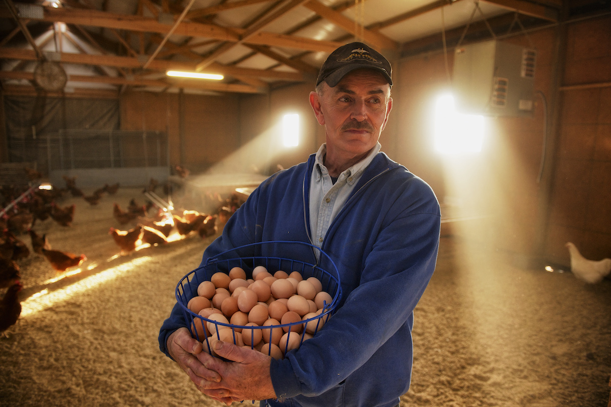 Frank Collecting Eggs